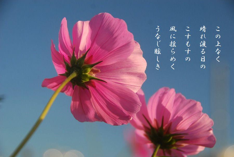 それぞれの秋_c0187781_00213061.jpg