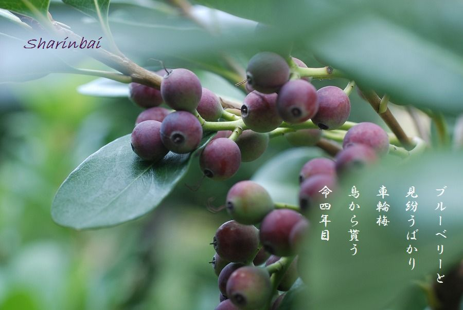 それぞれの秋_c0187781_00253123.jpg