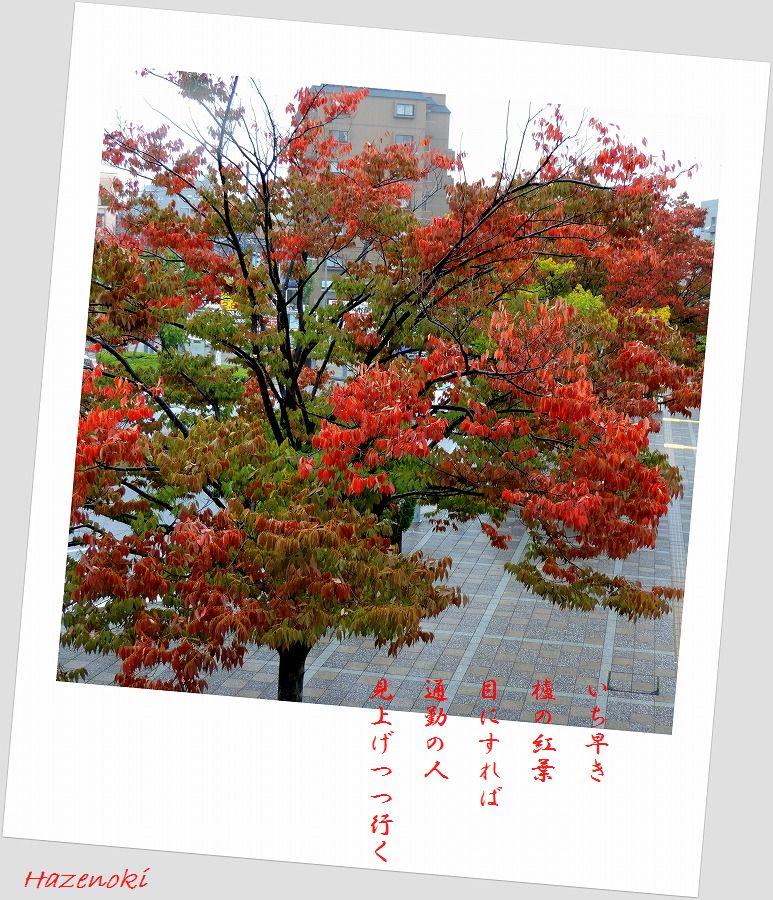 それぞれの秋_c0187781_00281614.jpg