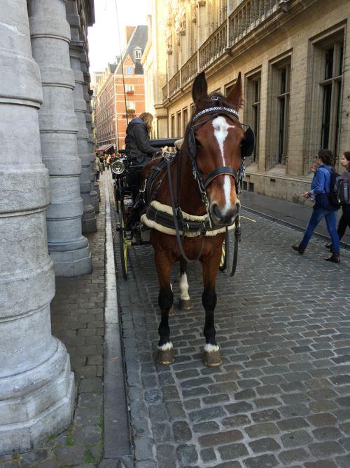 ベルギー写真。_c0108595_18494895.jpg