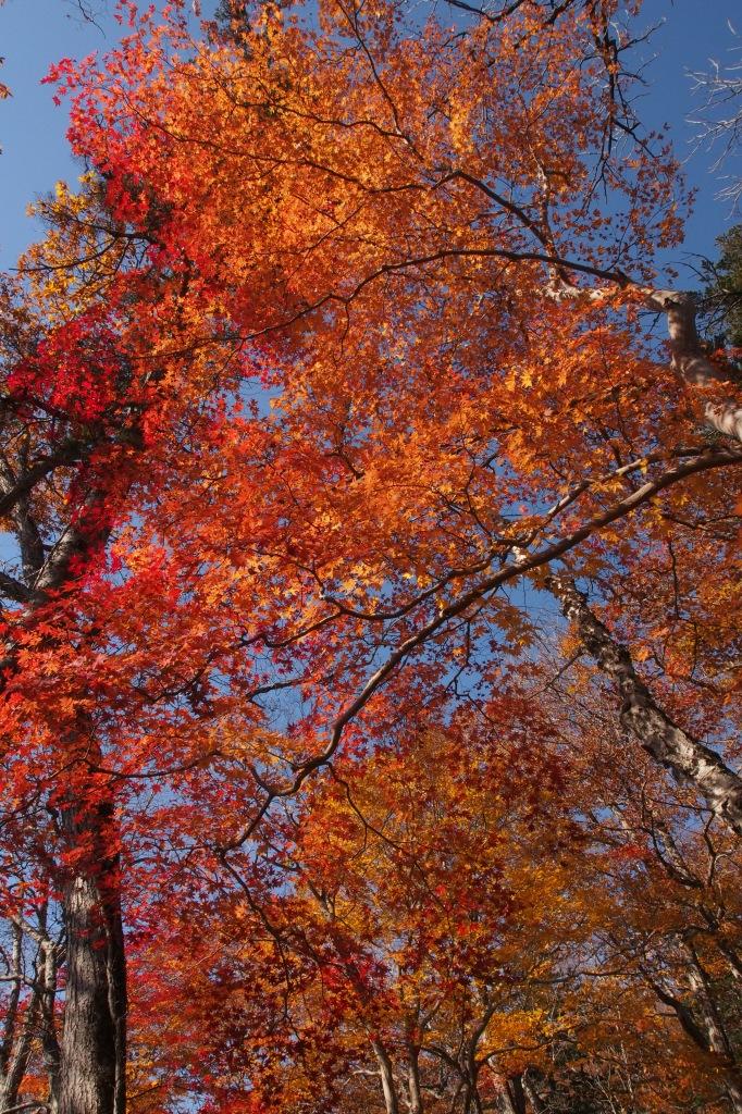イチャンコッペ山、10月23日_f0138096_16101889.jpg