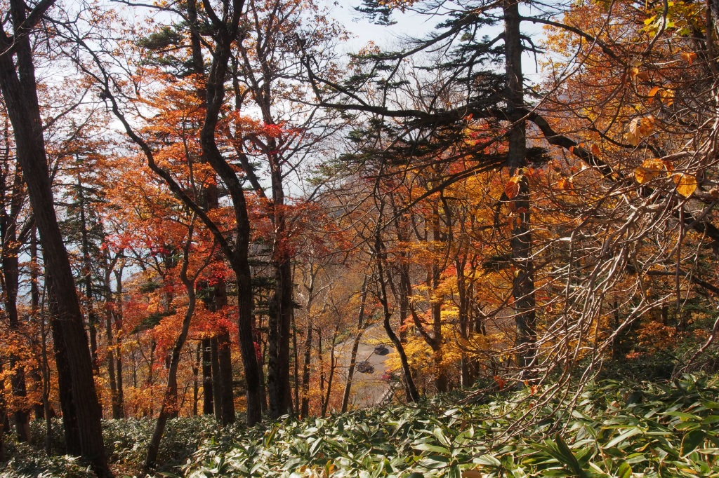 イチャンコッペ山、10月23日_f0138096_1610253.jpg