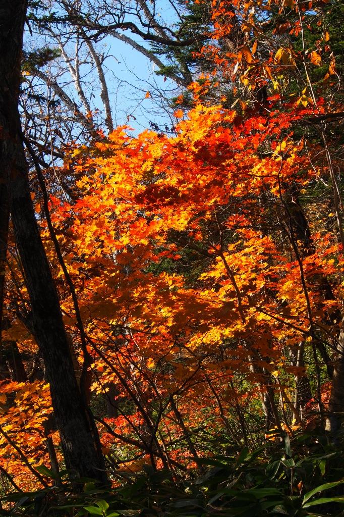 イチャンコッペ山、10月23日_f0138096_16102628.jpg