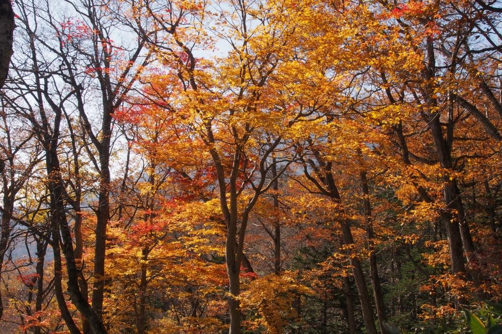 イチャンコッペ山、10月23日_f0138096_16103322.jpg