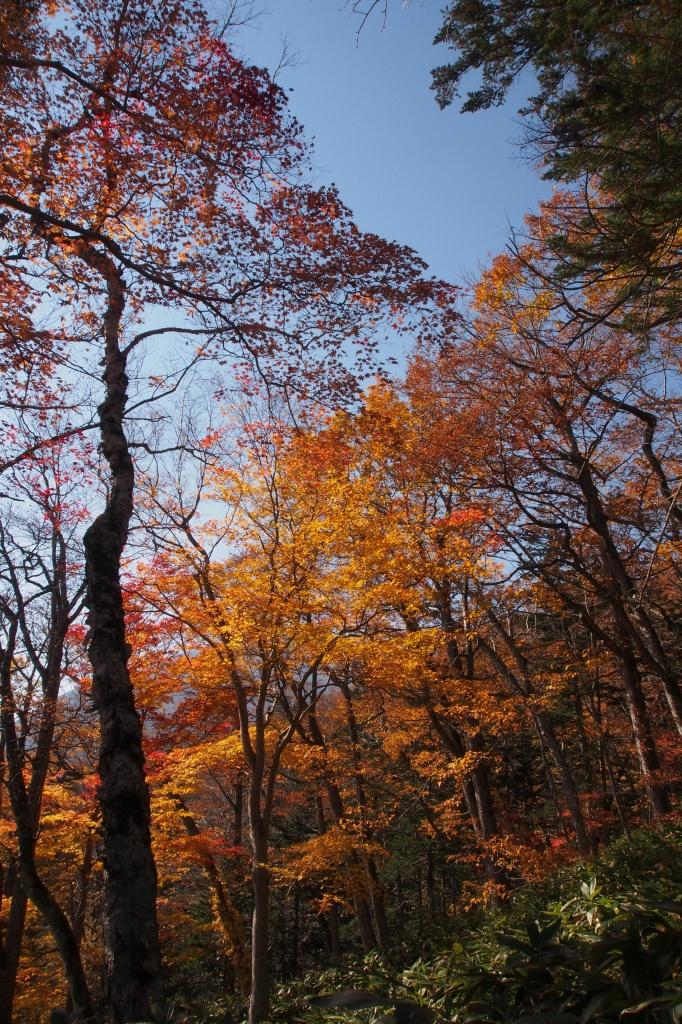 イチャンコッペ山、10月23日_f0138096_16105389.jpg