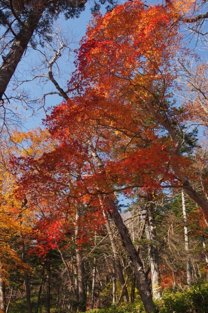 イチャンコッペ山、10月23日_f0138096_161132.jpg