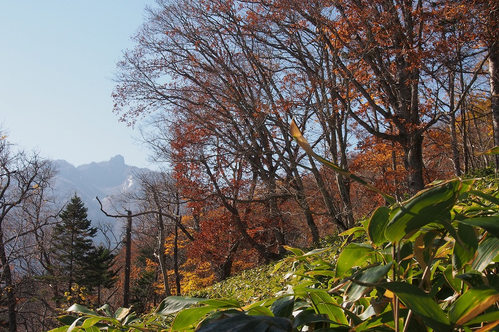イチャンコッペ山、10月23日_f0138096_1612496.jpg