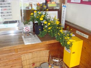 今年も菊の花が・・・_d0155416_15281771.jpg