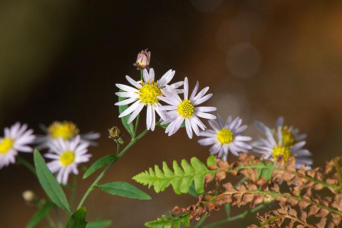 秋の草むら #3_c0067040_2275765.jpg
