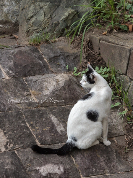 猫のいる風景 近所の黒白ちゃん_b0133053_1233061.jpg