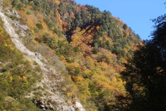 SKY141026 黒部川の清流が織り成す美しいコントラストの紅葉・黄葉綺麗。_d0288367_17351633.jpg