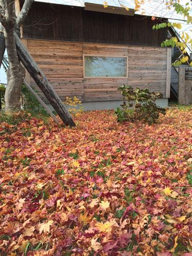 紅葉の落ち葉、『九間/ここのま』_c0189970_201423100.jpg