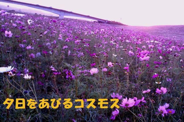 c0025171_2393563.jpg