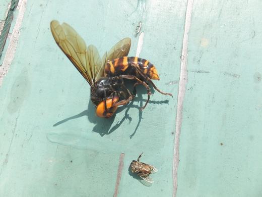 ミツバチの内検_d0251679_23201014.jpg