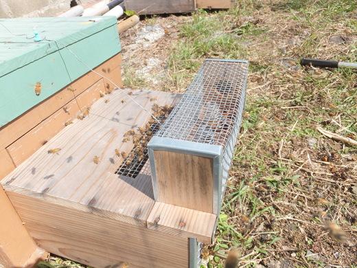 ミツバチの内検_d0251679_2323084.jpg