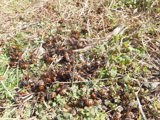ミツバチの内検_d0251679_23243322.jpg