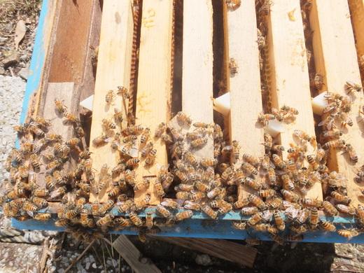 ミツバチの内検_d0251679_23293863.jpg