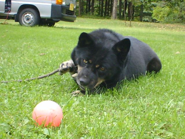 犬のはなし_b0343293_22510351.jpg
