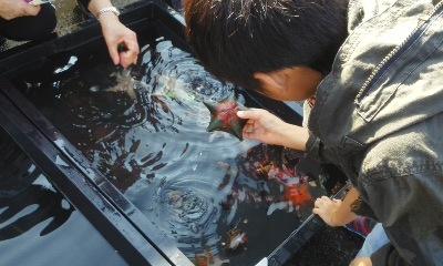 海あるき町歩き江名、市民文化祭_e0068696_19121783.jpg