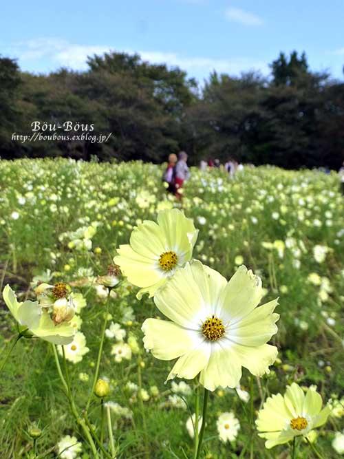 初秋の昭和記念公園_d0128697_19573077.jpg