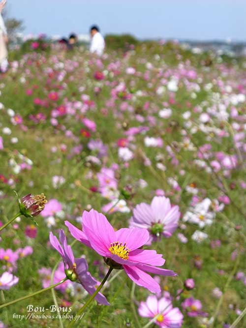 初秋の昭和記念公園_d0128697_19574446.jpg
