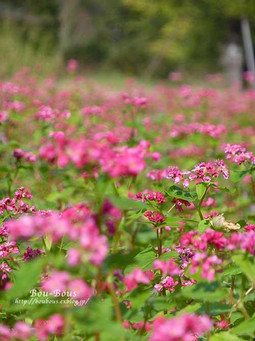初秋の昭和記念公園_d0128697_19574963.jpg