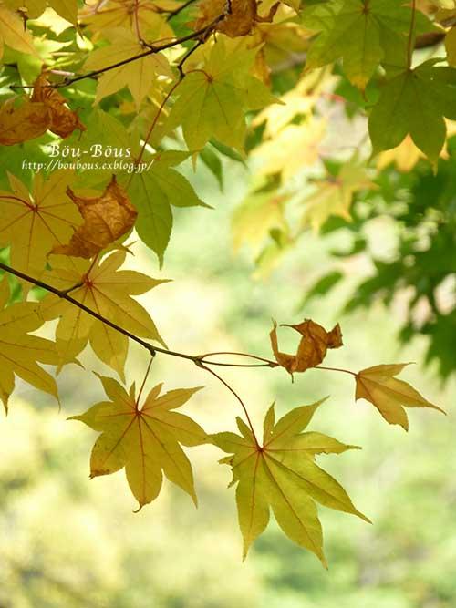 初秋の昭和記念公園_d0128697_19575978.jpg