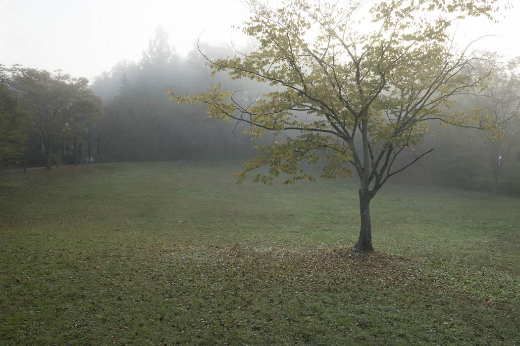 霧の日_b0074098_1962535.jpg