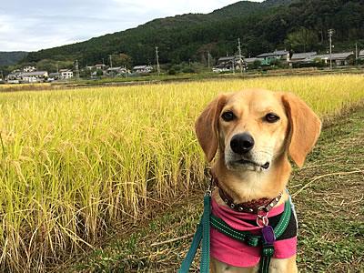 稲刈り_d0207298_1114562.jpg
