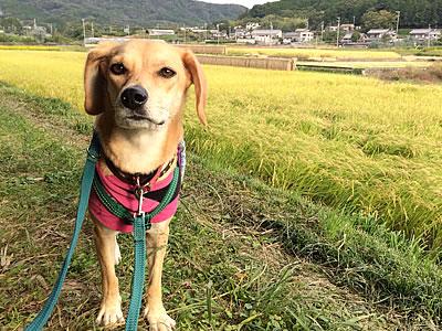 稲刈り_d0207298_11155366.jpg