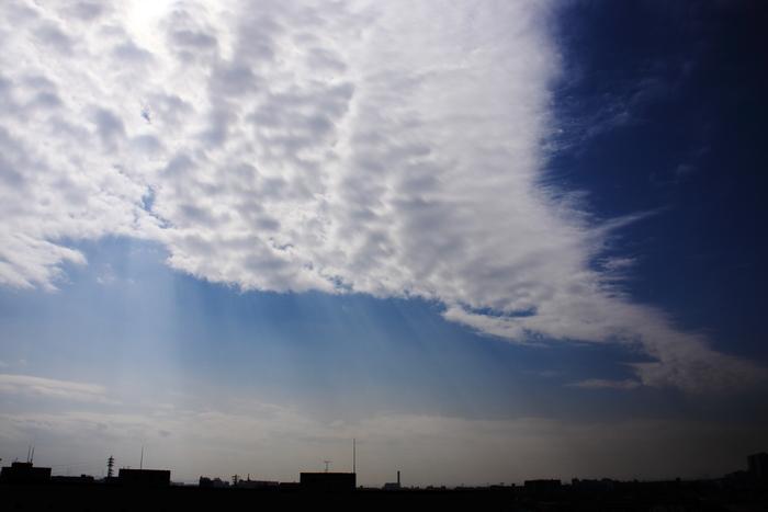 まだら雲 (層積雲)_b0268615_16294245.jpg