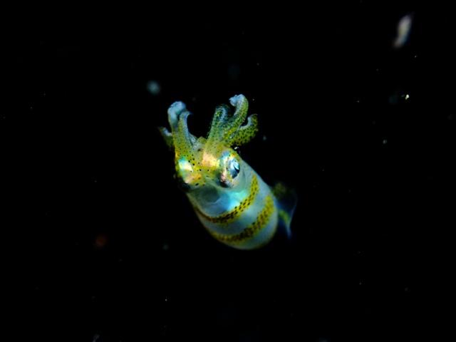 Sari Diveのナイトダイビング_c0211615_1115715.jpg