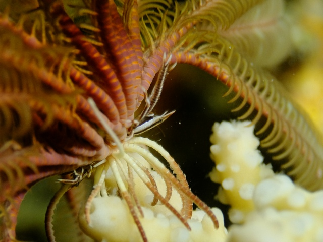 Sari Diveのナイトダイビング_c0211615_1165230.jpg