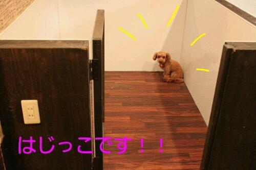 b0130018_16353926.jpg
