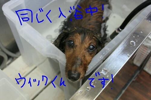 アルマゲドン_b0130018_20114455.jpg