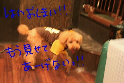 b0130018_2012478.jpg