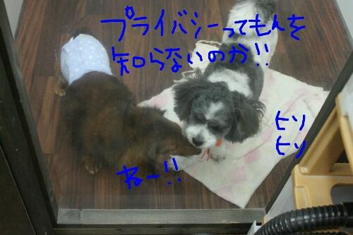 b0130018_20144280.jpg