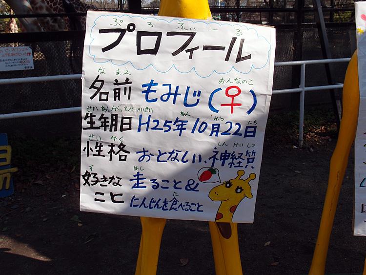 2014.10.25 宇都宮動物園☆キリンのもみじちゃんお誕生日会【giraffe】_f0250322_221372.jpg