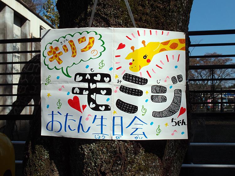 2014.10.25 宇都宮動物園☆キリンのもみじちゃんお誕生日会【giraffe】_f0250322_221867.jpg