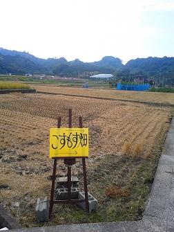 浅海原のコスモス畑(詳細編)_c0034228_21104824.jpg