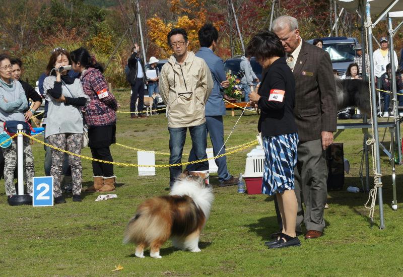 JKC Shetland sheepdog speciality show 2days_f0126965_1431048.jpg