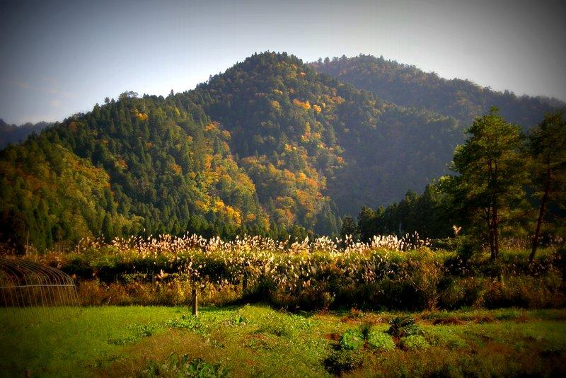 秋色へ_c0057390_2323577.jpg