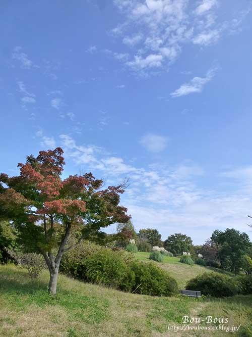 初秋の昭和記念公園その2_d0128697_16572121.jpg
