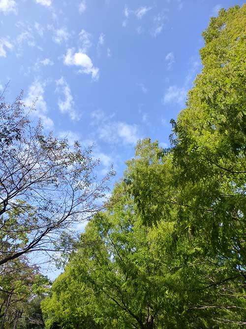 初秋の昭和記念公園その2_d0128697_1657681.jpg