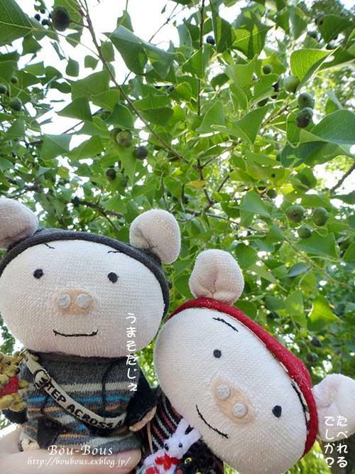 初秋の昭和記念公園その2_d0128697_17142363.jpg