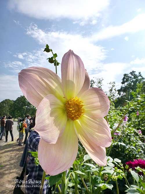 初秋の昭和記念公園その2_d0128697_172425.jpg