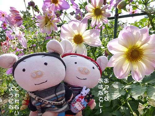 初秋の昭和記念公園その2_d0128697_1724884.jpg
