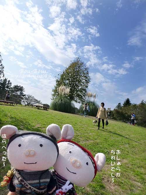 初秋の昭和記念公園その2_d0128697_1725528.jpg