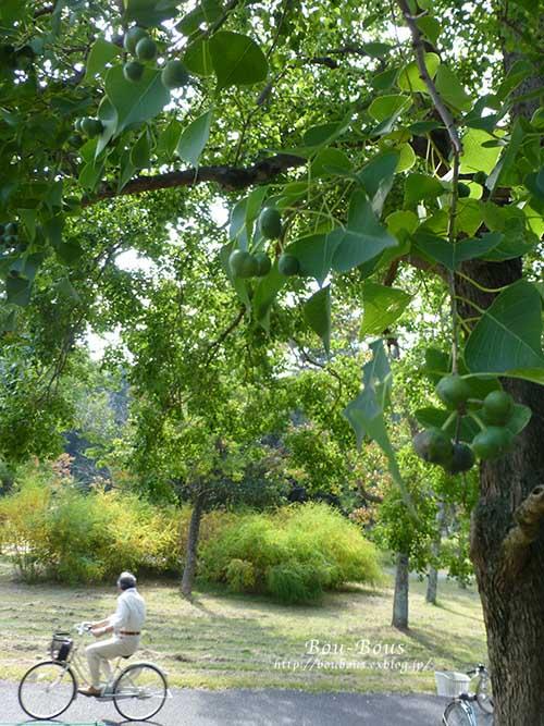 初秋の昭和記念公園その2_d0128697_1728343.jpg