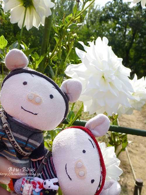 初秋の昭和記念公園その2_d0128697_1732169.jpg